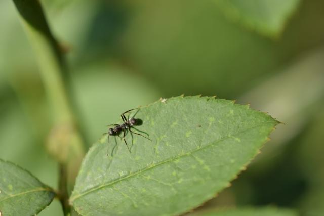 コウモリ 糞 消毒 対策
