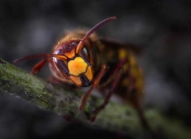 スズメバチ カチカチ 時期 雌雄