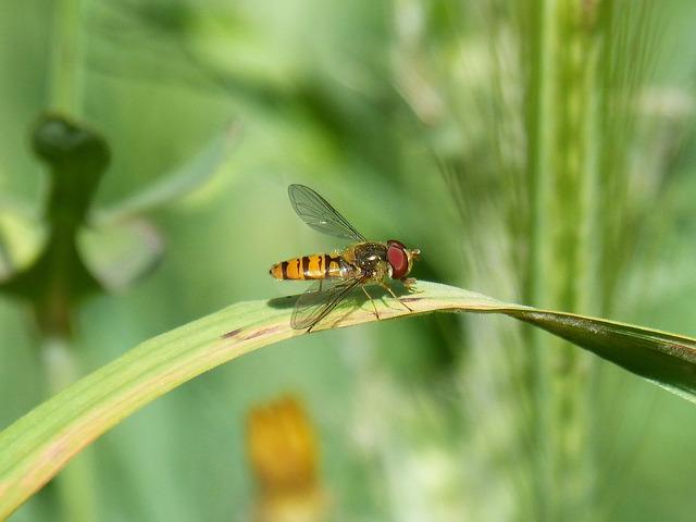 アブ 幼虫 駆除 生態 種類 越冬