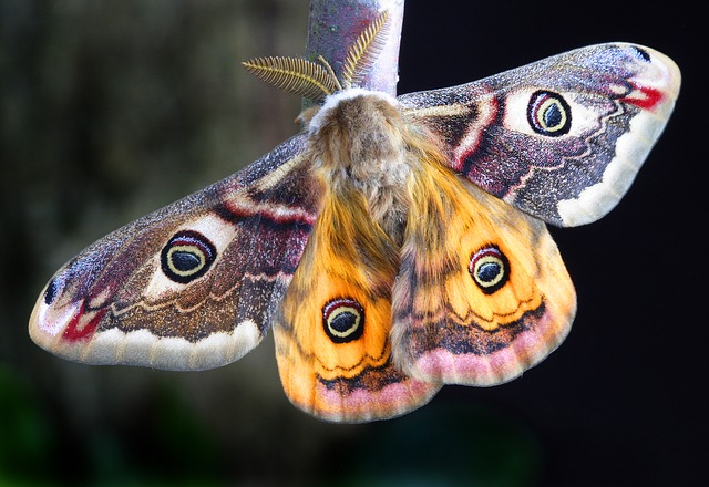 蛾 寿命 食べ物 種類 毒 ハチドリ