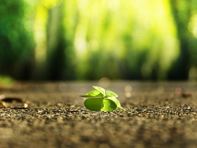シロツメクサ クローバー 栽培 種 時期