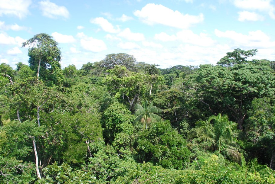 top spots in the amazon