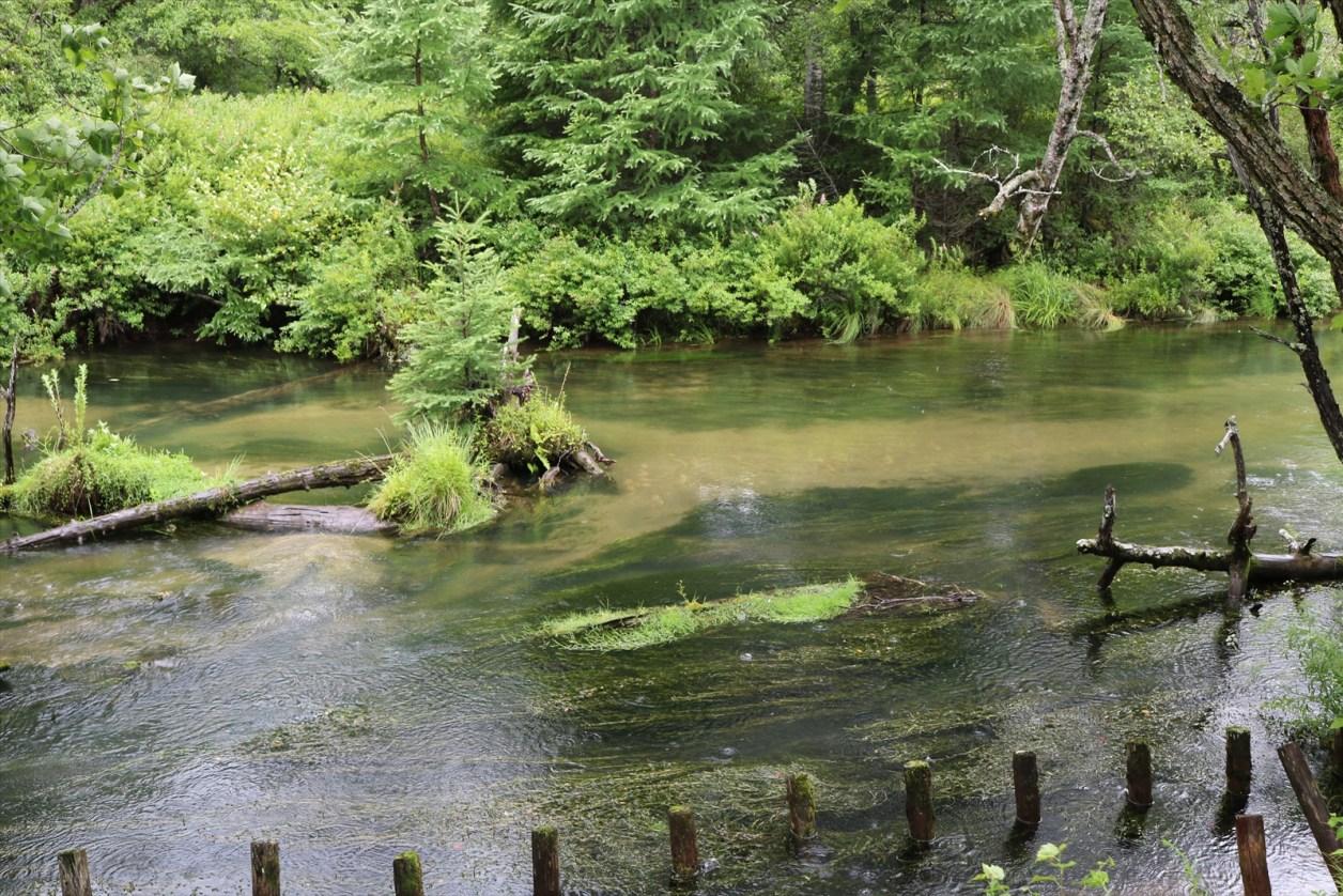 木道の隣の川