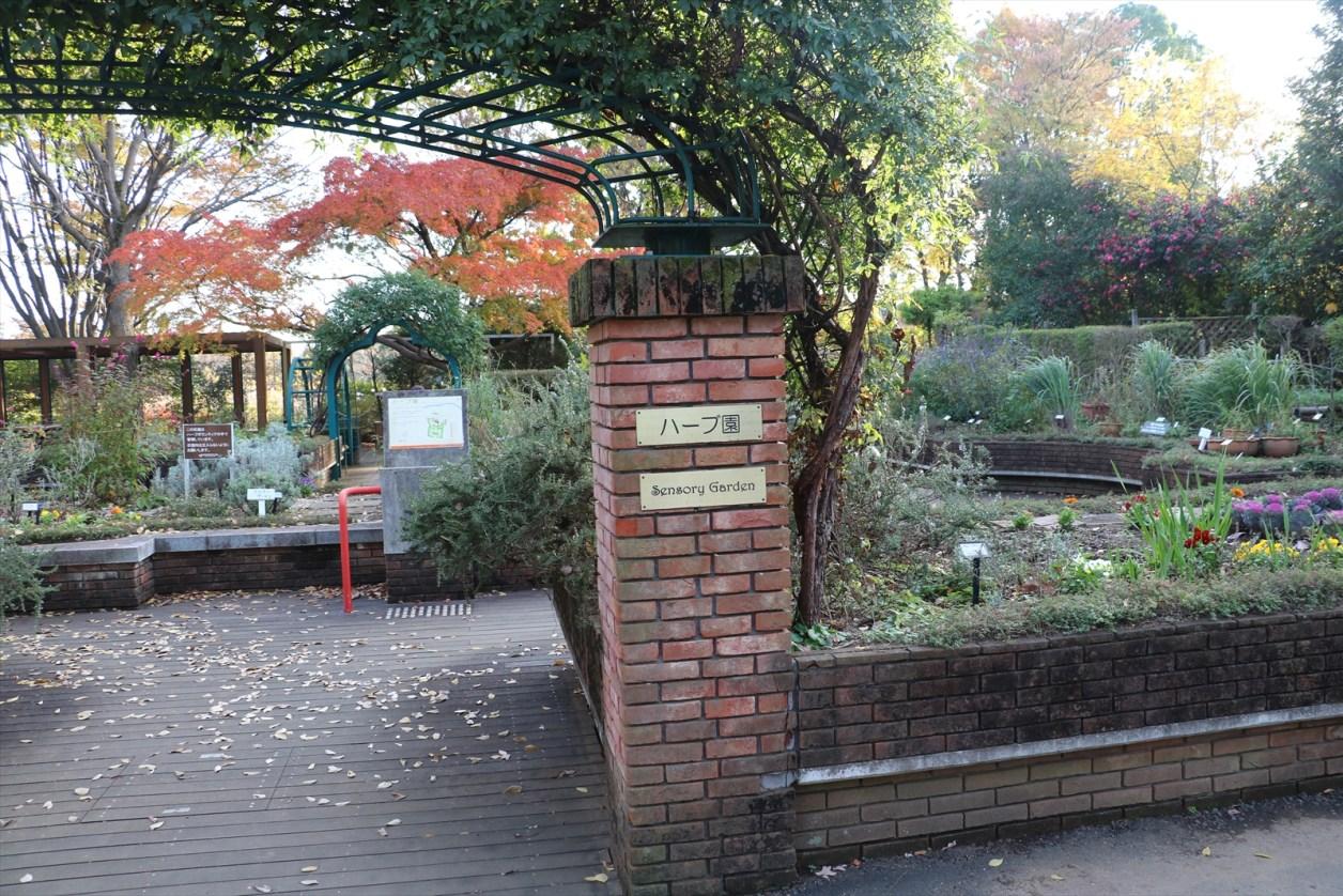 昭和記念公園 ハーブ園