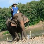 【就職に有利?!】ラオスのルアンパバーンで象使いの資格を取ろう!