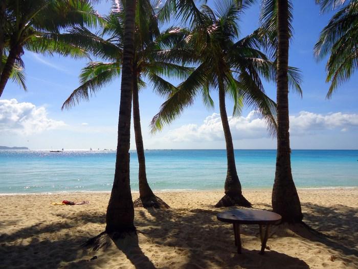 boracay palms