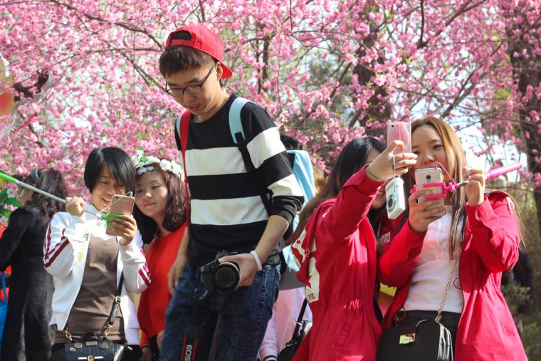 Where to see cherry blossoms in Beijing - Travel Lush
