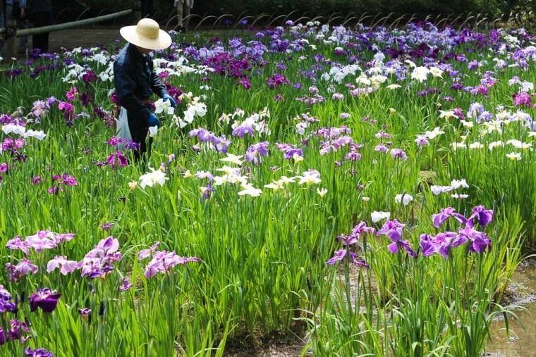 gardens tokyo (1 of 1)