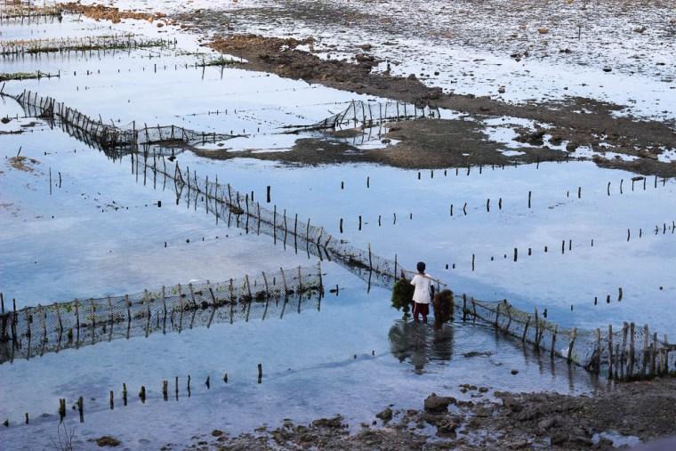 seaweed-farmer-nusa-penida-1-of-1