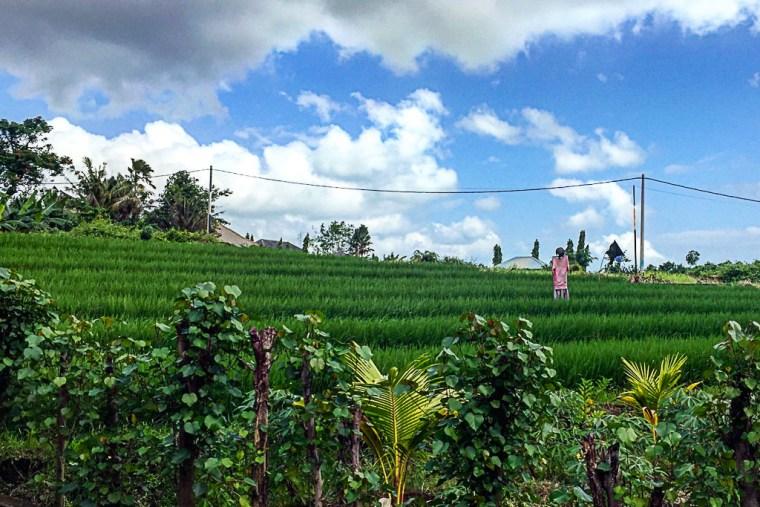 rice-terrace-canggu-bali