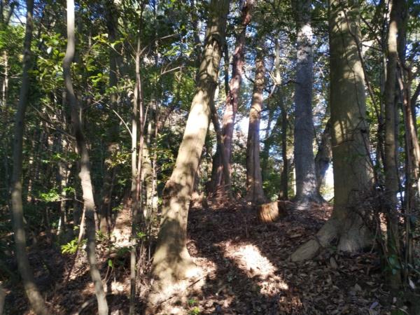 檜尾塚陵墓参考地