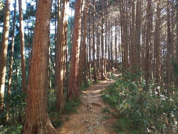 上赤阪城跡の道