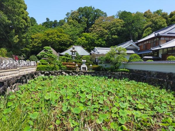 興禅寺の蓮池