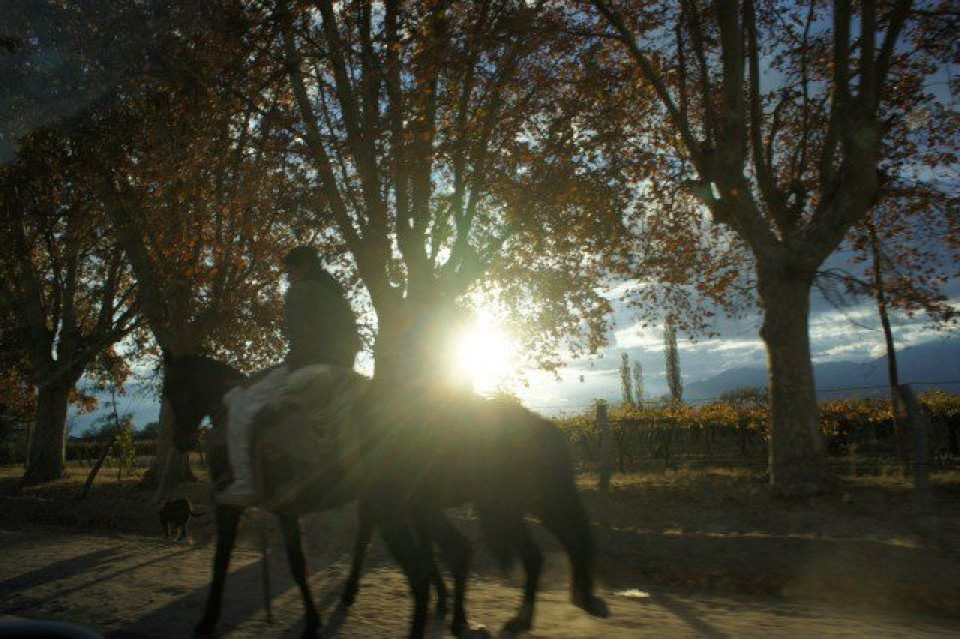 Sun, horses and vineyards - yup, pretty much sums up Cafayate