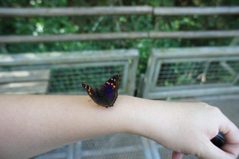 Brave Butterflies