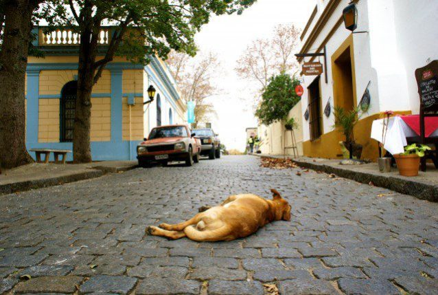 Even the dogs are bored.