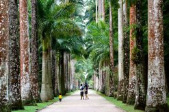 The Jardim Botanico