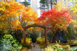 Autumn in Seoul - best time to visit Korea