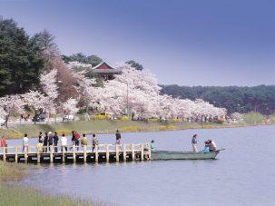 """Gyeongpo Cherry Blossom,"" by gangwon.to"
