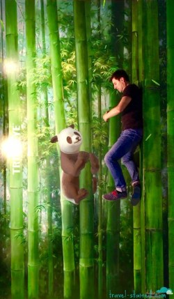 In the AR video, this panda bear is moving!