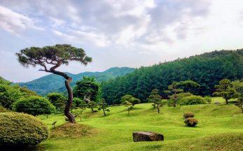 garden of morning calm in korea
