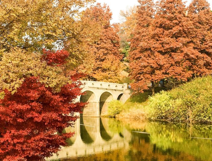 olympic park during autumn in seoul