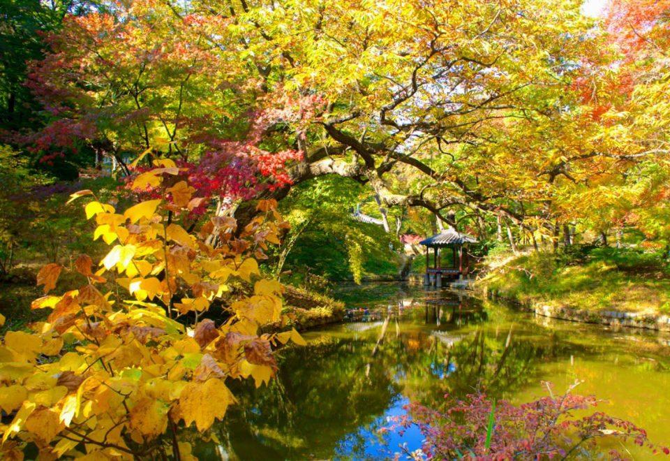 secret garden at changdeokgung in seoul during autumn