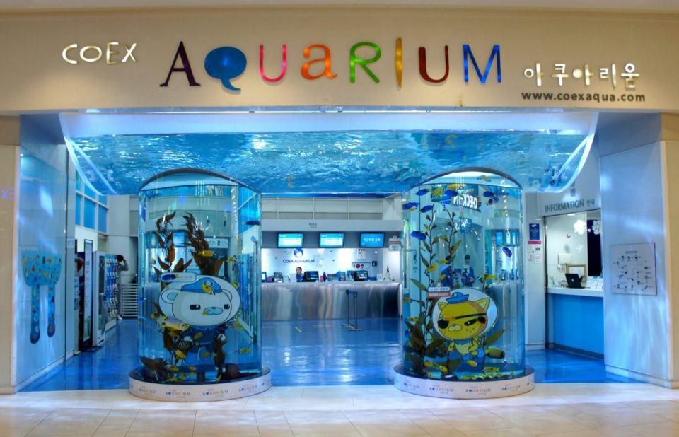coex aquarium at starfield coex mall