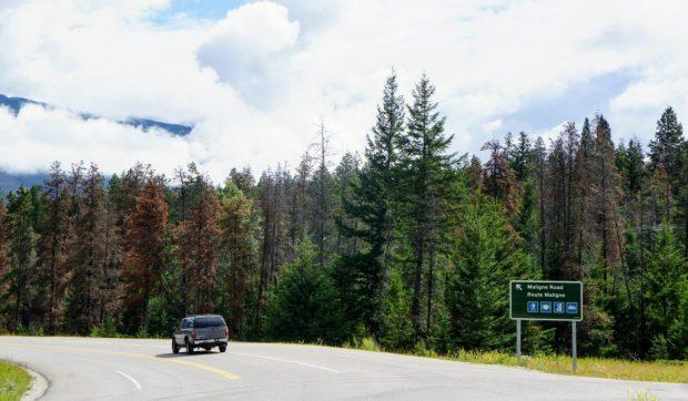 highway to Maligne Lake
