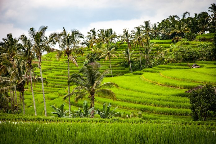 A honeymoon in Bali that will make you fall in love all over again
