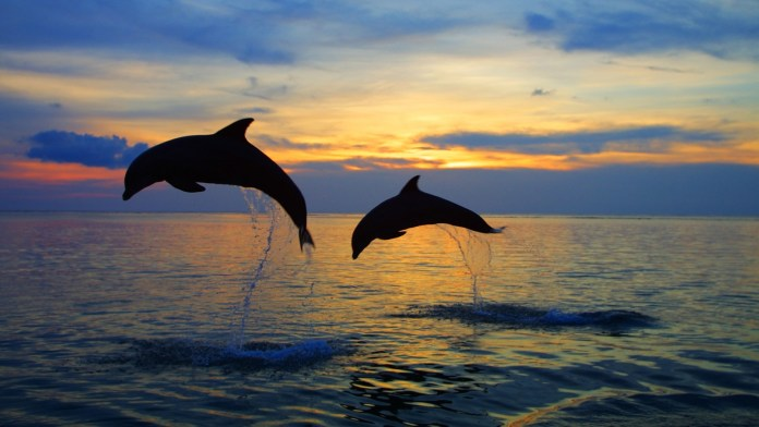 Lovina is the perfect spot for watching dolphins in the sunset.