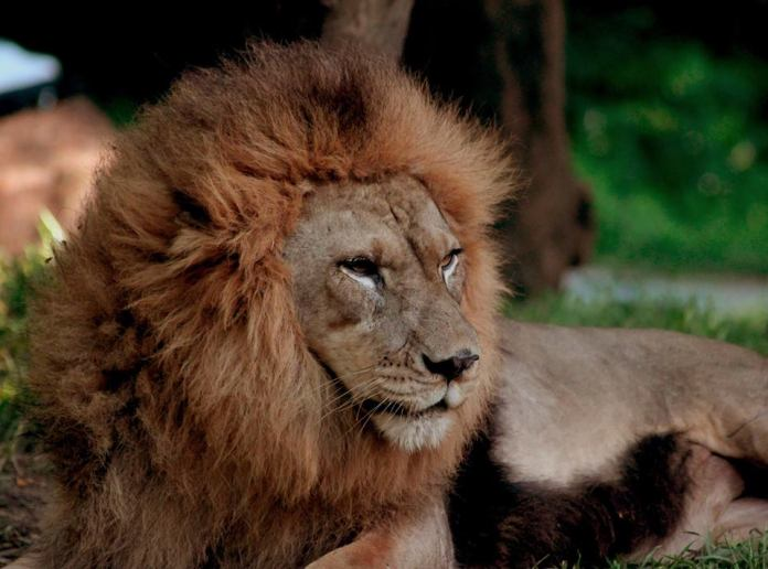Bali Safari & Marine Park should be at the very top of your holiday itinerary plan. Image: www.facebook.com/BaliSafari