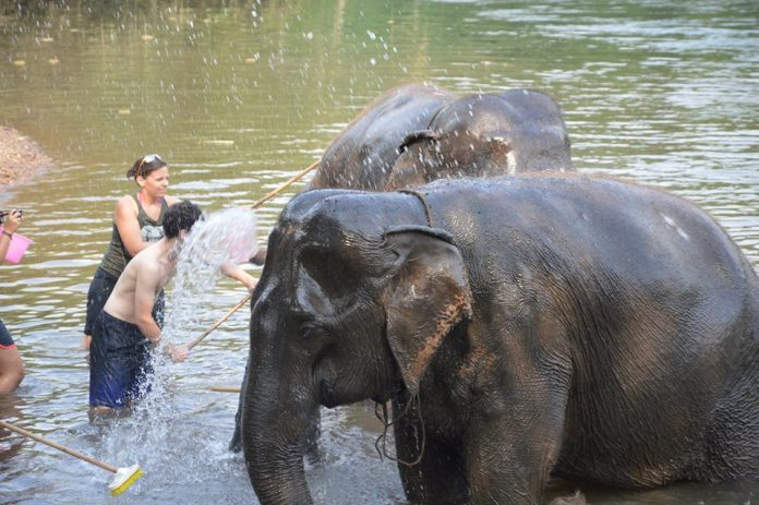 Elephants for Christmas in Thailand