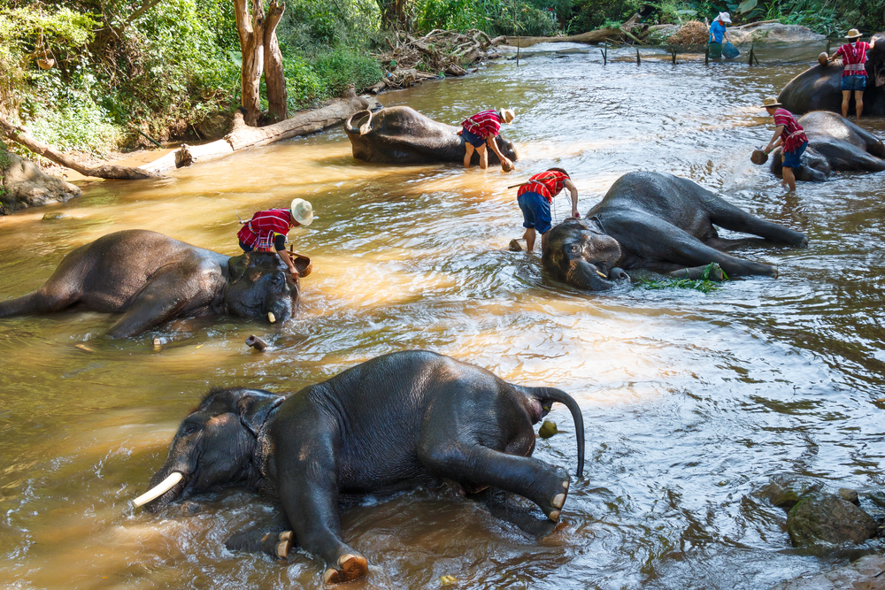 Elephant care, chiang mai, sustianable tourism thailand