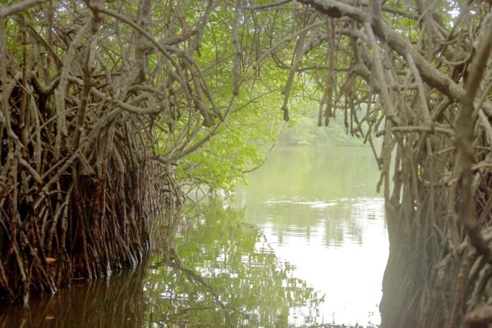 Madu Ganga River Safari is a great adventure