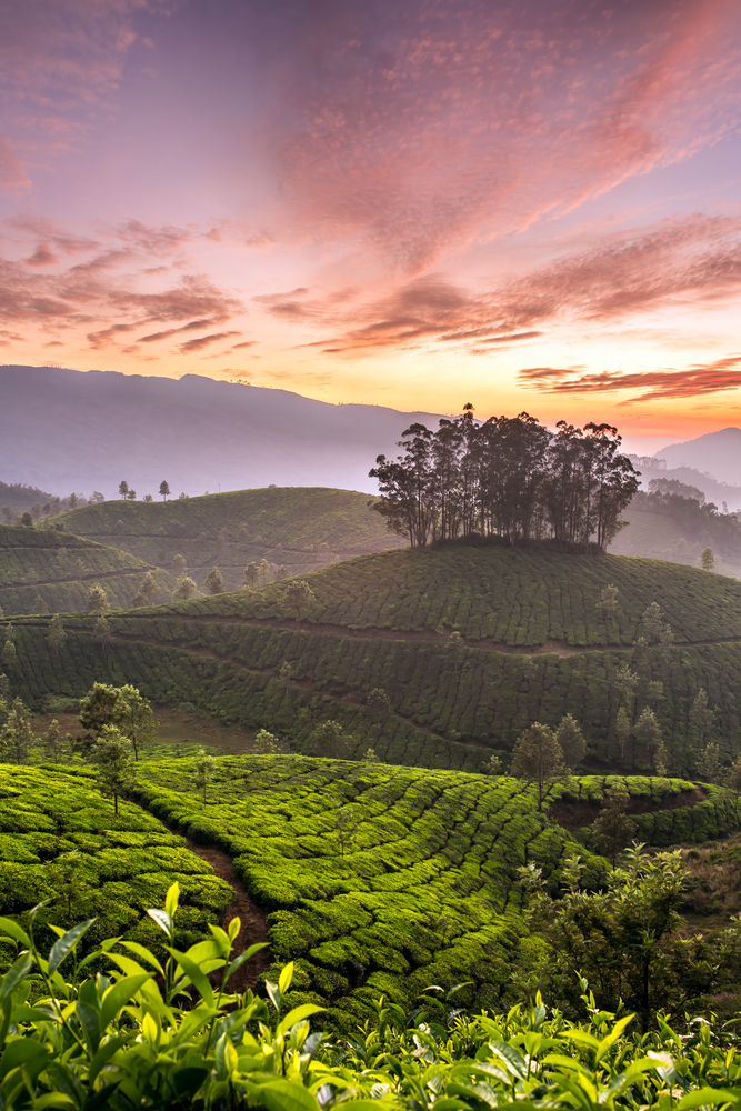 Sri Lanka (also kniwn as Ceylon) is home to one of the world's most known tea plantations