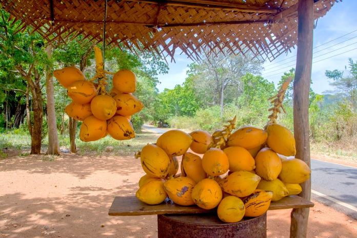 For healthy and authentic food in Sri Lanka, the king coconut is a must!