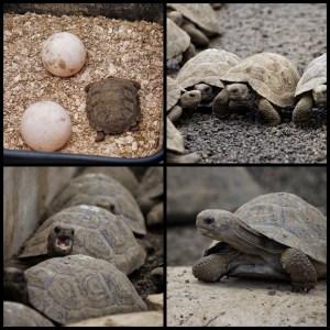 Galapagos Turtle Breeding Center