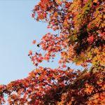 旅行好きが選ぶ!2013年紅葉が美しい観光スポットTOP10