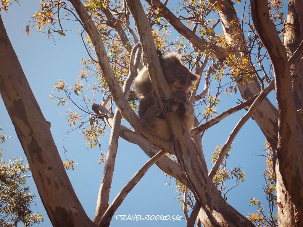 North Perth1- travel.joogo.sg