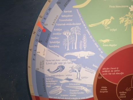 closeup of the Paleozoic
