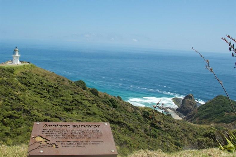 Cape Reinga - Ancient Survivor