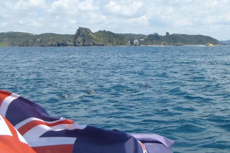 Bay of Islands - Define