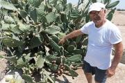 <h5>Corner cactus</h5>