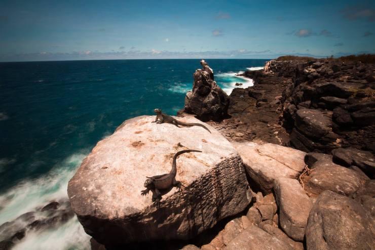 Brendan Van Son Galapagos Islands Ecuador 12