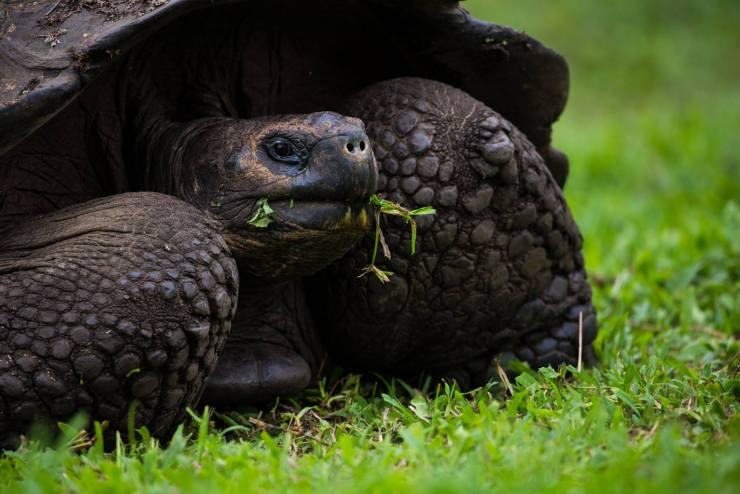 Brendan Van Son Galapagos Islands Ecuador 6