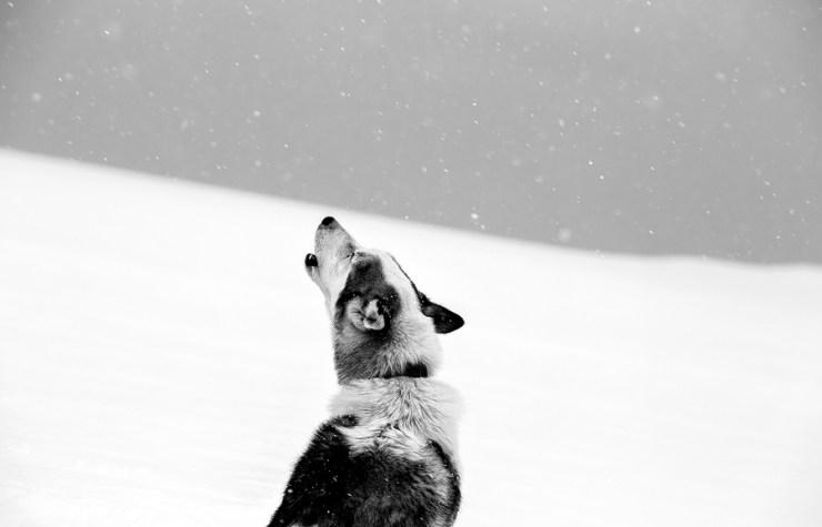 Svalbard 20