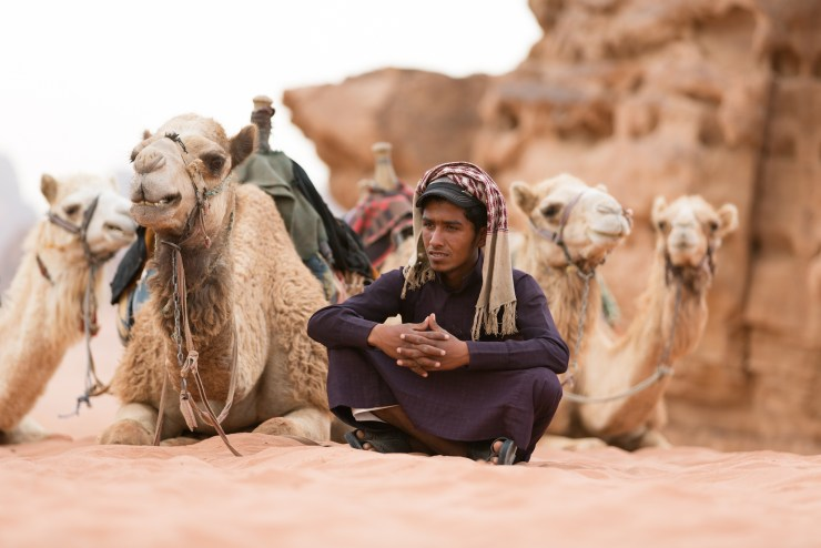 Wadi Rum Jordan Camels Portrait Michael Bonocore