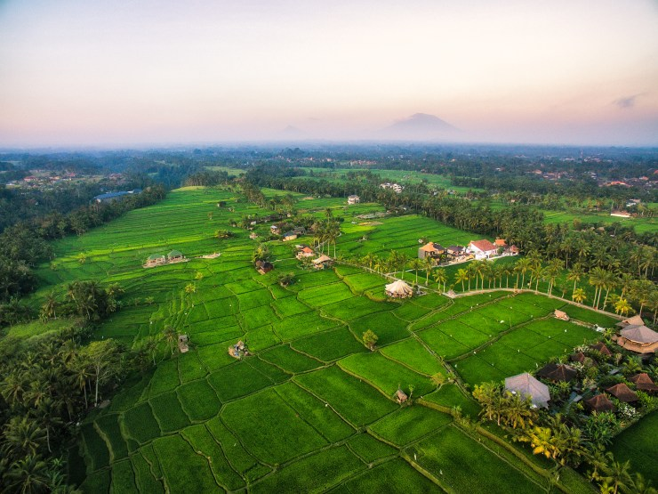 Indonesia flying over rice fields near Ubud Bali by Michael Matti