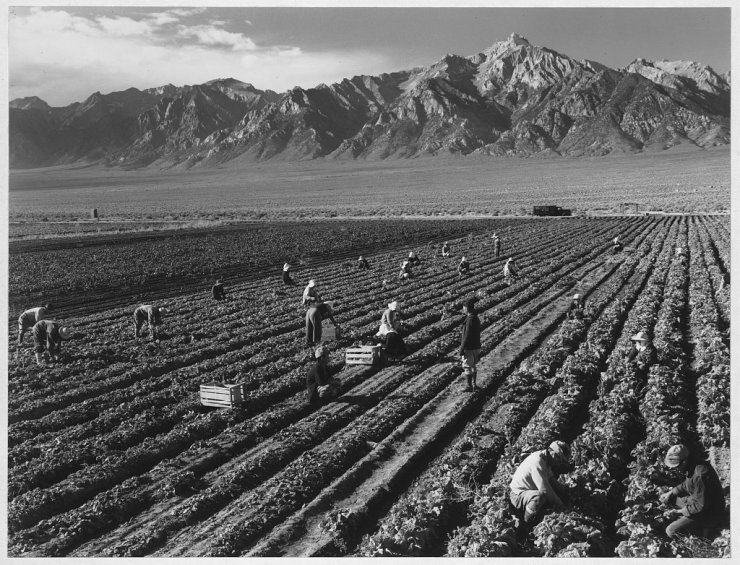 Ansel Adams Japanese Internment Camp 9